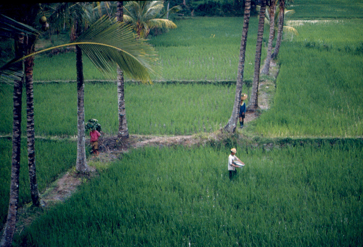 Rice farmers in Bali - 35mm slide by E. Jurus