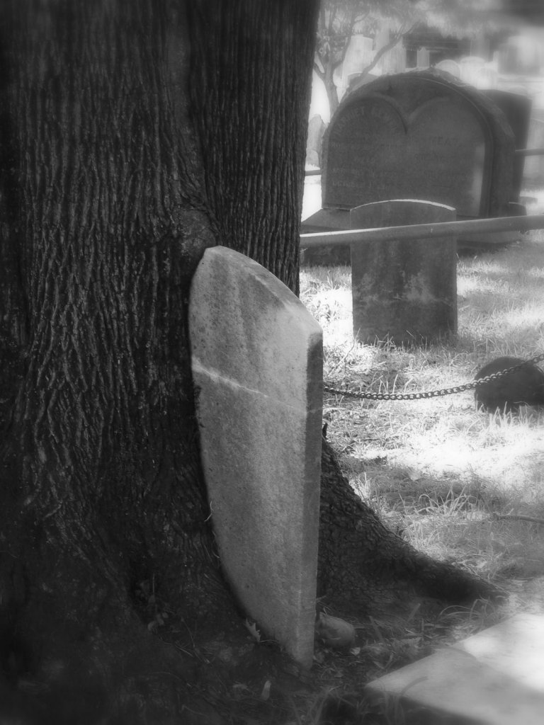 A creepy gravestone-eating tree in Sleepy Hollow Cemetery - photo by E Jurus