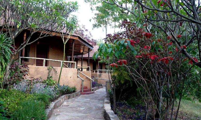 Poinsettias at the Mara Sopa Lodge, Kenya - photo by E Jurus