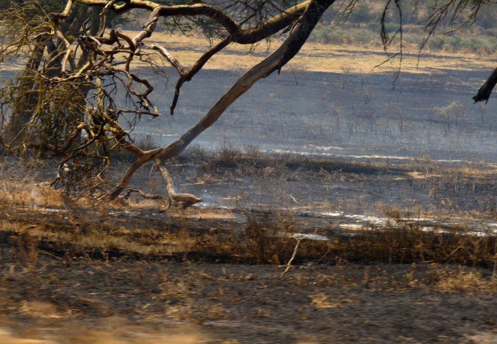 Driving through a smoldering landscape - photo by E. Jurus