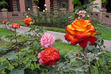 Beautiful roses in one of the courtyards of the convent - photo by E. Jurus