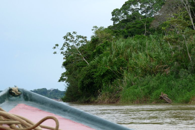 The Amazon rainforest frames the river - photo by E. Jurus