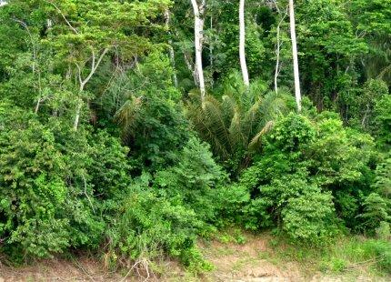 The wonderful lush foliage of the Amazon rainforest - photo by E. Jurus