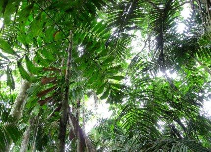The many-layered canopy layer of the Amazon jungle - photo by E. Jurus