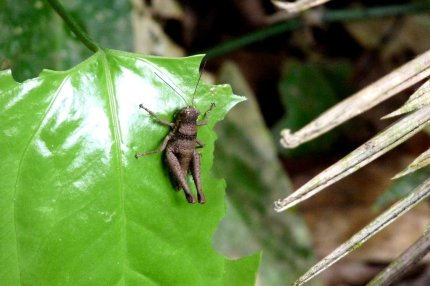 An insect we spotted in the jungle - even our guide didn't know what it was - photo by E. Jurus